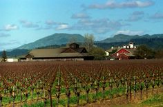 Frog's Leap Winery - Rutherford, Napa Valley