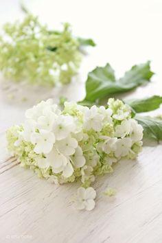 pretty flowers for a spring wedding