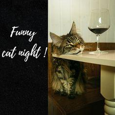 Auf der Instagram Seite the_fantastic_cats findest du immer lustige Fotos von Katzen.// #katzen#fotografie#getränke#ideen#wohnen Funny Cats, Animals, Instagram, Funny Photography, Homes, Animales, Animaux, Funny Kitties, Animal