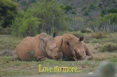 love no more!