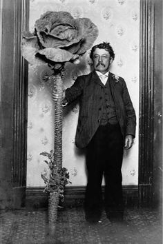 10.28 am, Friday 13th 1891: Nimrod Pleasant took the secret of growing supersized roses to his grave.