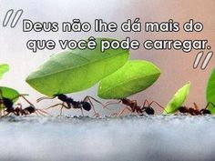 Deus, dar, carregar... - http://www.facebook.com/photo.php?fbid=10151205074041537=a.405013966536.174277.270056796536=1=nf - 601240_10151205074041537_1392467617_n.jpg (400×300)
