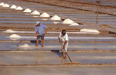 Salinas da Figueira da Foz, Salt - Portugal