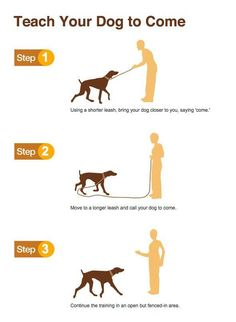 Need to train your dog! Check out this great Dog Training site -