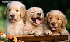 ay pudios que lindos <3 ...cachorros tiernos - Buscar con Google
