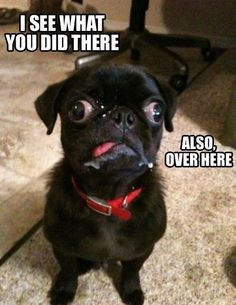 Laughed out loud so hard I had a coughing fit. I'm so glad my Shih-tzu doesn't have this issue.