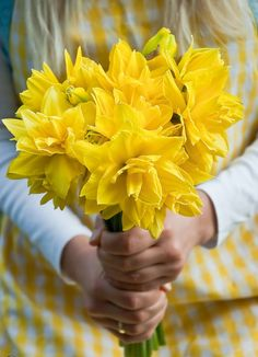 Narcissus - A bunch of Spring for you (by MeetaK) - Situsku Holding Flowers, Birth Flowers, My Flower, Flower Power, Yellow Cottage, Yellow Springs, Welcome Spring, Spring Has Sprung, Shades Of Yellow