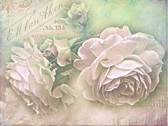 Gallery.ru / Фото #52 - Ещё раз розы... - Anneta2012