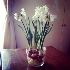 4月に入りました。春の花オンパレードなうです。みなさんも様々にお花を飾ったり、育てたりされていることと思います。うちのベランダには今、ヒヤシンスにムスカリ、ミニアイリスが咲いています。昨年のうちに植え