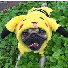 This Halloween, All the Dogs Choose You, Pikachu