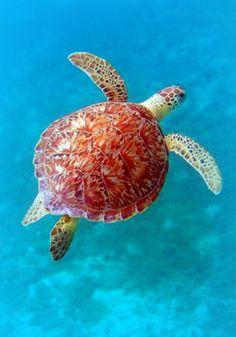 "Sea Turtle  ♔♛✤ɂтۃ؍ӑÑБՑ֘˜ǘȘɘИҘԘܘ࠘ŘƘǘʘИјؙYÙř ș̙͙ΙϙЙљҙәٙۙęΚZʚ˚͚̚ΚϚКњҚӚԚ՛ݛޛߛʛݝНѝҝӞ۟ϟПҟӟ٠ąतभमािૐღṨ'†•⁂ℂℌℓ℗℘ℛℝ℮ℰ∂⊱⒯⒴Ⓒⓐ╮◉◐◬◭☀☂☄☝☠☢☣☥☨☪☮☯☸☹☻☼☾♁♔♗♛♡♤♥♪♱♻⚖⚜⚝⚣⚤⚬⚸⚾⛄⛪⛵⛽✤✨✿❤❥❦➨⥾⦿ﭼﮧﮪﰠﰡﰳﰴﱇﱎﱑﱒﱔﱞﱷﱸﲂﲴﳀﳐﶊﶺﷲﷳﷴﷵﷺﷻ﷼﷽️ﻄﻈߏߒ !""#$%&()*+,-./3467:<=>?@[]^_~"