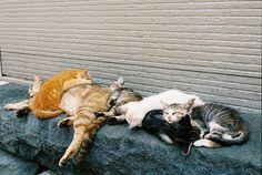 Cute cats and dogs Cool Cats, I Love Cats, Cute Kittens, Cats And Kittens, Crazy Cat Lady, Crazy Cats, Neko, Gatos Cats, Tier Fotos