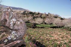 Floración Valle del Jerte (Cáceres)  www.vallecereza.com