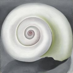 grey and white, classic shape, concentric circles what is not to love? Georgia O'Keefe 1928 shell no.1