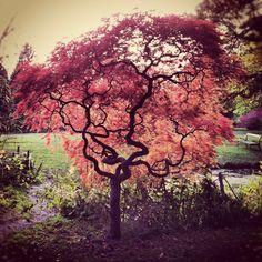 Magic tree.