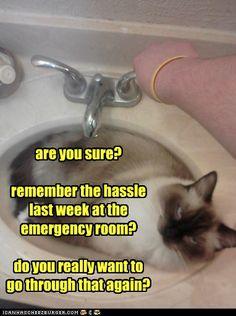 just too silly http://sulia.com/channel/cats/f/2f47901a-b39b-40a9-a354-7c40c87f0d0b/?