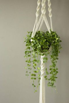 White Macrame plant hanger for wide pot, Dischidia nummularia