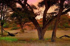 Kalahari Magic by Johanna Hedderwick on 500px