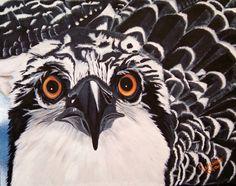 Osprey Eyes, oil painting by Debbie LaFrance
