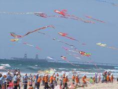 Kite Club India | Kite Flyers India | Kite Festival India - From wp.com