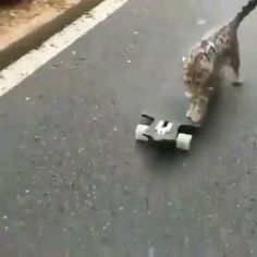 Smart kitty 🐱 – Pets and Supplies Cute Kittens, Cute Cats And Dogs, Cool Pets, Cats And Kittens, Funny Animal Memes, Cute Funny Animals, Cute Baby Animals, Animals And Pets, Funny Cats