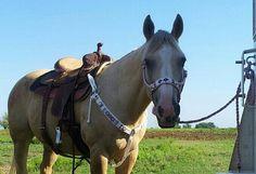 beaded horse breast collar on Etsy, $200.00