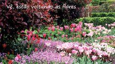 Estão voltando as flores - Emílio Santiago.