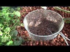 Adding Worms to you Aquaponics System