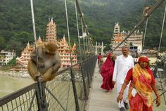 Visiting Rishikesh in India, the birthplace of yoga? Find out about ashrams, Ayurveda, where to stay, and what to do in this Rishikesh travel guide. Rishikesh Yoga, Rishikesh India, Cool Places To Visit, Places To Travel, Places To Go, Haridwar, Top Destinations, India Travel, India Trip