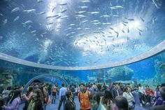 *Chimelong Ocean Kingdom has been crowned the world's largest aquarium by Guinness World Records