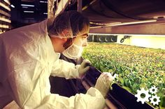 Innovation is making pricey and complicated indoor agriculture a more viable means of growing organic crops.