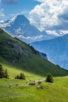 Eiger, Switzerland Please bring me back to Switzerland. I miss this view so badly.