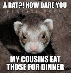I've had so many people tell me that they are rats!! Sure not! I'll say this to the next person who tells me that haha
