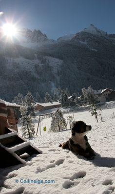 Mountain Dog   Chamonix Mont Blanc   Aiguille du Midi   Chalet Valhalla   Collineige.com