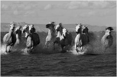 Like almost all girls I love horses! This website has fantastic photography! http://1x.com