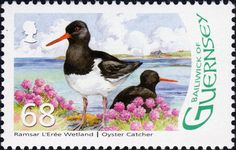 Známky: Eurasian Oystercatcher (Haematopus ostralegus) (Guernsey) (Designation of L'Eree Wetland as Ramsar Site) Mi:GG 1101,Yt:GG 1111,Sg:GG 1128