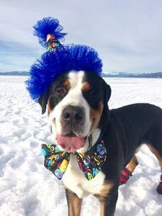 Dog Party Hat Large by digginitdesigns on Etsy