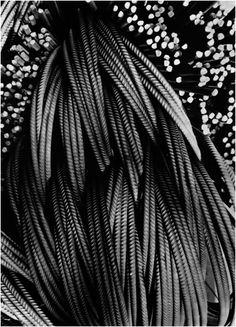 ΒΙΟΧΑΛΚΟ 1970/ Δημήτρης Χαρισιάδης Great Photographers, Monochrome, Plant Leaves, Minimal, Greek, Around The Worlds, Black And White, Photography, Image