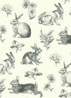 papers.quenalbertini: Rabbits