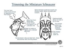 Schnauzer trimming guide.