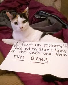cat-shaming-14__605-811x1024.jpg (800×1010)