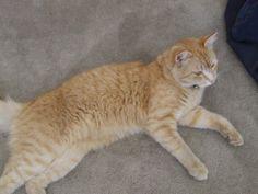 Jilly Cat | Pawshake Port Kennedy