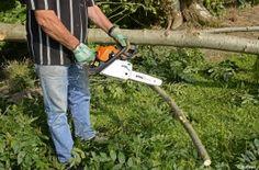 Article - Comment abattre un arbre ? Blog.jardideco.fr