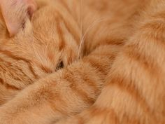 Orange kitty love!