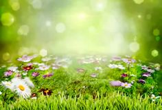 Spring Scenery Colorful Flowers Green Backdrop for Photography – Dbackdrop Easter Backdrops, Muslin Backdrops, Custom Backdrops, Photography Backdrops, Photography Photos, Colorful Flowers, Spring Flowers, Green Grass Background, Spring Scenery