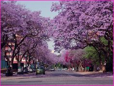 Pretoria, South Africa Here at the Pretoria University, we say that some serious studying is starting for final year end exams, when the Jacarandas start to bloom) Heavenly Places, Amazing Places, Out Of Africa, Famous Places, Naturally Beautiful, Africa Travel, Nature Photos, Beautiful Images, Wonders Of The World