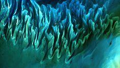 Résultats de recherche d'images pour «plantas marinas»