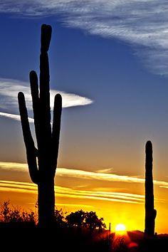 Arizona Saguaro Sunset