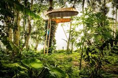 As seen in the Gypset Living series, the treehouse of the Bambu Indah eco Resort in Ubud, Bali.