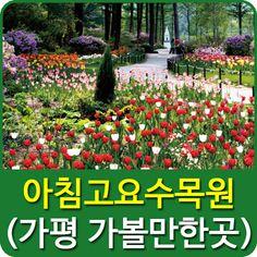 경기도 가볼만한곳 중 하나로 가평군 상면 축령산 자락에 위치하고 있는 < 아침고요수목원 >은 22여개 주제로 정원이 꾸며진 테마정원으로 서울에서 당일치기 여행지와 데이트코스로 유명한 명소 입니다.
